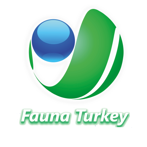 Fauna Turkey