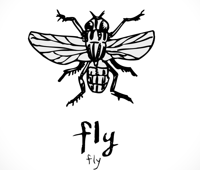 faunaturkey fly