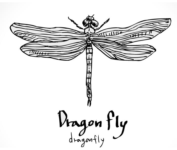 faunaturkeydragonfly