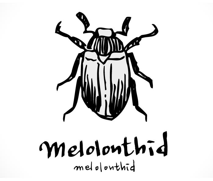 faunaturkeymelolonthid